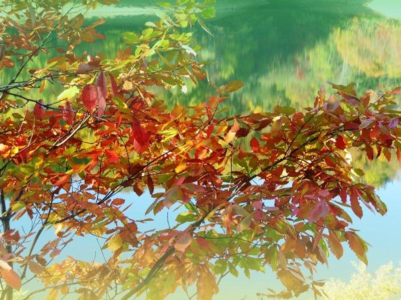 20201017富里湖と紅葉.JPG