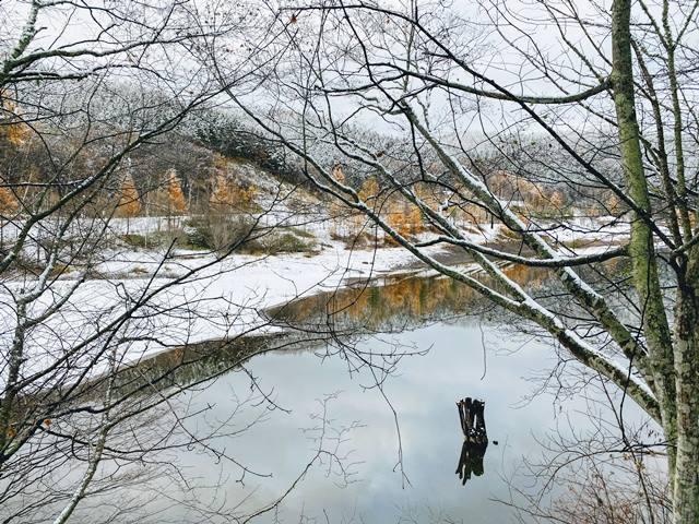 20201110サイケデリック ピエさん富里湖写真 (10).jpg