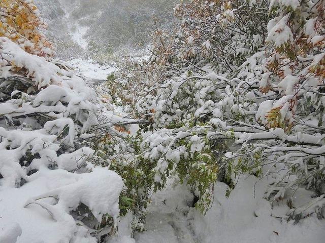 雪の重みで.jpg